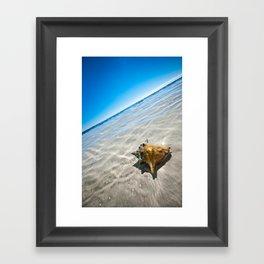 shell Framed Art Print