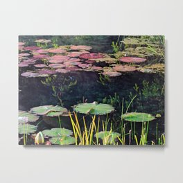 Lily Pads at Sunrise Metal Print