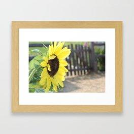 Sunflower - Gate Framed Art Print