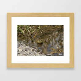Whatcha Looking at Frog? Framed Art Print