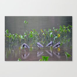 Relaxing on the lake Canvas Print
