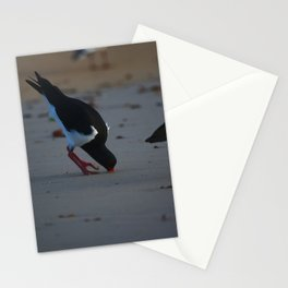 A Pied Oyster Catcher In To The Hilt Stationery Cards