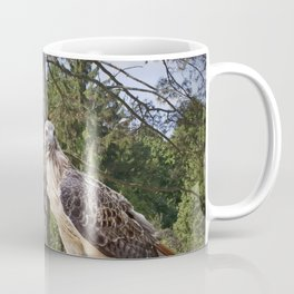 Pair of Red-tail Hawks in West Michigan Woodland Coffee Mug