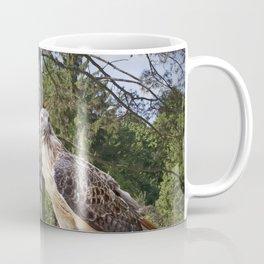 Pair of Red-tail Hawks in West Michigan Woodland Coffee Mug