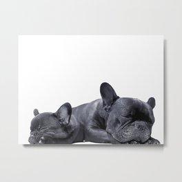 sleeping frenchies Metal Print