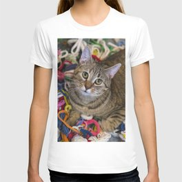 Kitten In Colorful Looms T-shirt
