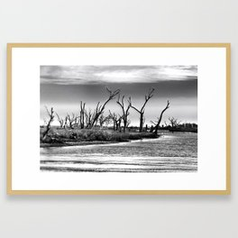 Dying Cypress Trees, Louisiana Framed Art Print