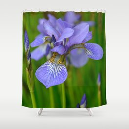 Siberian Iris by Teresa Thompson Shower Curtain
