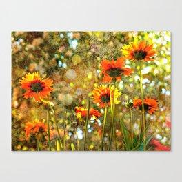 Coreopsis Sunburst Canvas Print