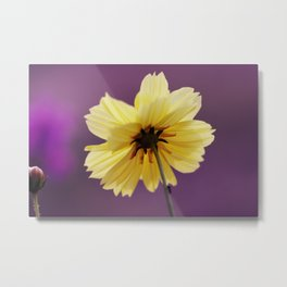 Yellow solitaire 52 Metal Print