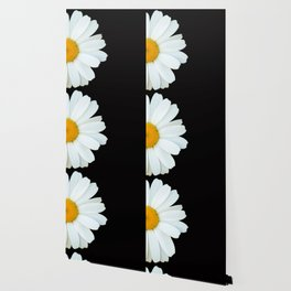 Hello Daisy - White Flower Black Background #decor #society6 #buyart Wallpaper