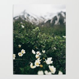 Baby Blooms Poster
