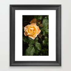 Rose 1 Framed Art Print