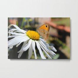 Farfalla su margherita Metal Print