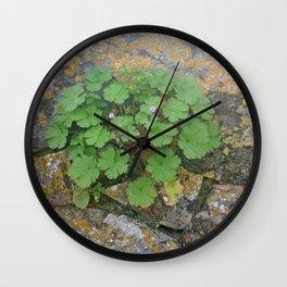 Life on a stone wall Wall Clock