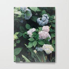 Hydrangeas in the Yard Metal Print