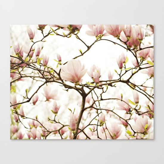 Queen For A Day Pink Magnolia Flower Canvas Print