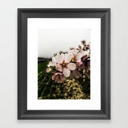 Flor de Almendro Framed Art Print
