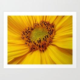 Sunflower heart Art Print