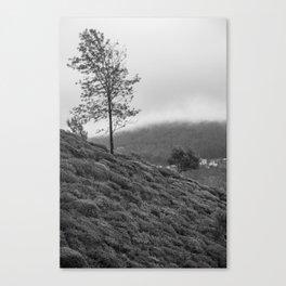 Tea Hill Tree BW Canvas Print