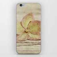 hydrangea iPhone & iPod Skins featuring hydrangea by Bonnie Jakobsen-Martin
