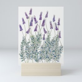 Lavender, Illustration Mini Art Print