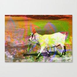 goat flower Canvas Print
