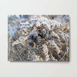 White frost covered cones Metal Print
