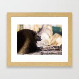 Gulo Gulo Framed Art Print