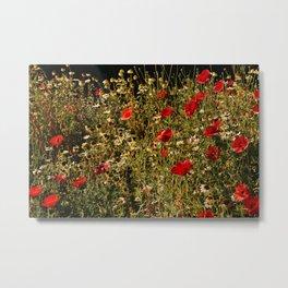 Beautiful poppies flower garden Metal Print