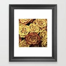 Beautiful Roses Framed Art Print