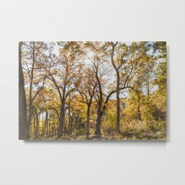 A Walk in the Woods - Autumn Nature Photography Metal Print