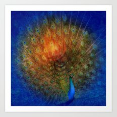 Peacock in Blue Art Print