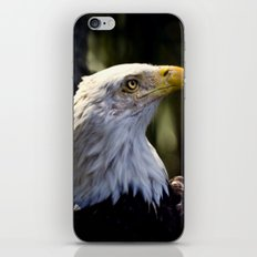 Proud Bald Eagle iPhone & iPod Skin