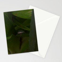 Curious Lizard Stationery Cards