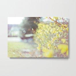 Yellow Forsythia Metal Print