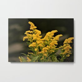 Golden Rod Metal Print
