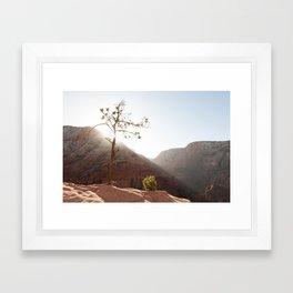 Morning Light on Angel's Landing Tree (Zion National Park, Utah) Framed Art Print