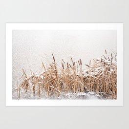 Typha reeds at frozen lake Art Print