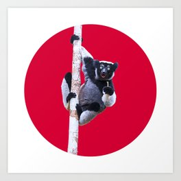 Indri indri sitting in the tree Art Print