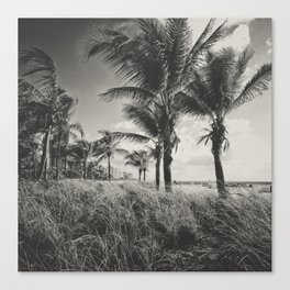 Coconut Palms at SOBE Canvas Print