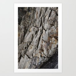 300 Year Old Tree Bark Art Print