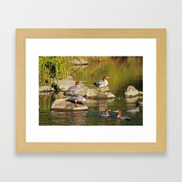 Loons on a Lake in the Summer Framed Art Print