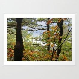Columbia Rover Gorge Washington Trees in Autumn Art Print