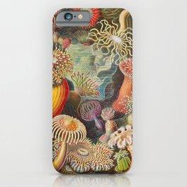 Ernst Haeckel Sea Anemones Vintage Illustration iPhone Case