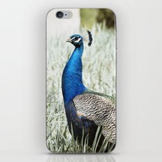 Peacock Bird in Nature Photography iPhone & iPod Skin