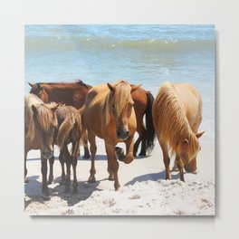 Watercolor Horse 58, Assateague Pony, Assateague, Maryland, Hanging with the Herd Metal Print