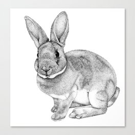 Conejo Canvas Print