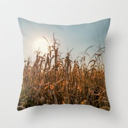 Corn field at sunset in the countryside of Lomellina Throw Pillow