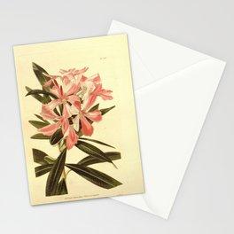 Flower nerium oleander26 Stationery Cards